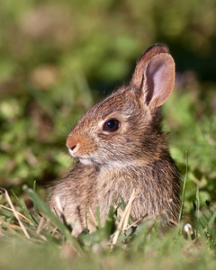 A wascially wittle wabbit