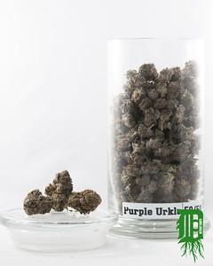Purple Urkle 1