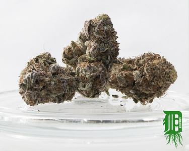 Purple Urkle 2