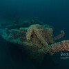 Detroit Steamer bow of the  shipwreck in Port Austin Michigan