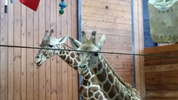 Detroit Zoo Photos - Misc