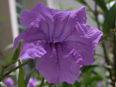 Grandparents Flower 2