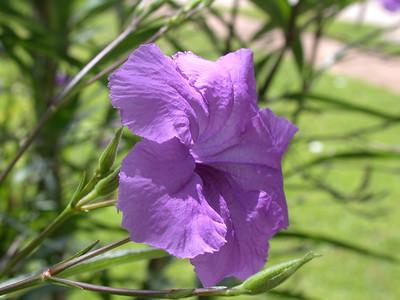 Grandparents Flower