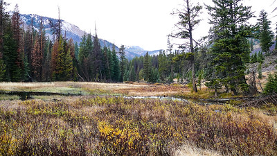 A bit up the trail, a number of beaver ponds appear.