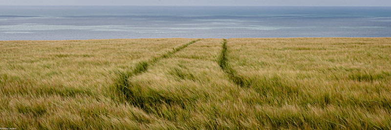 Barley Next the Sea