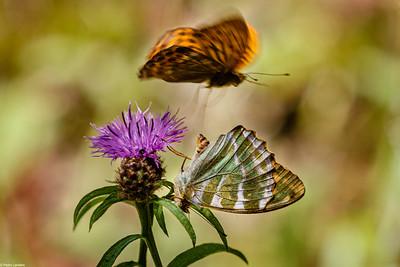 All of a Flutter