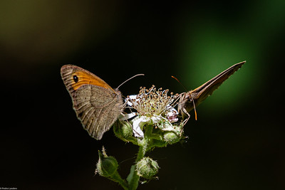 Sharing the Bramble Flower