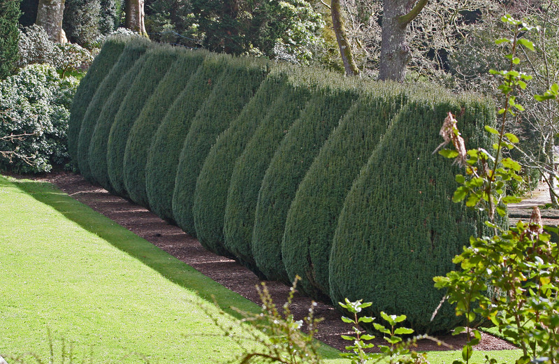 Perfectly trimmed bushes stand guard along lawns and pathways.