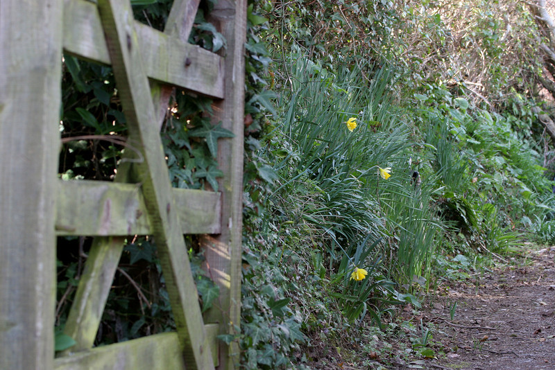 From the street a gate opens to a meandering garden pathway lined with wild flowers.