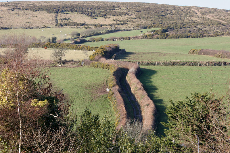 One of many single lane roads on Dartmoor  where only at occasional places is there room for cars to pass.