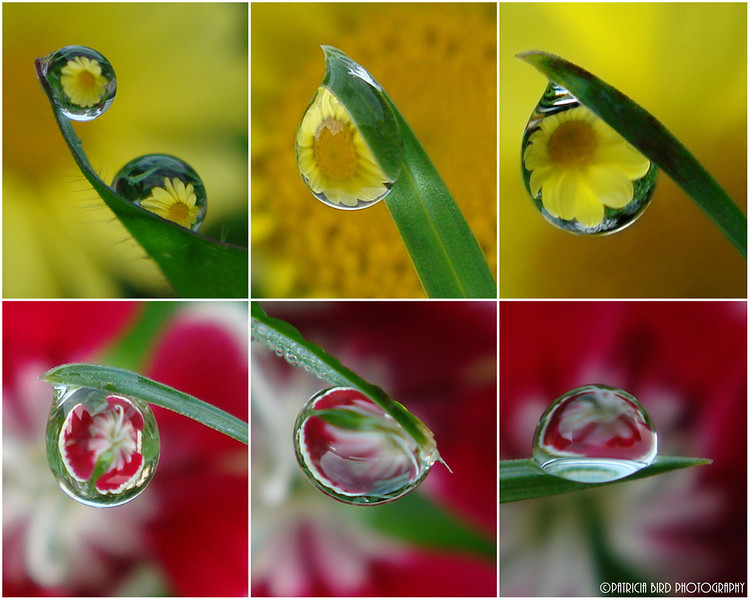 Flower Refractions