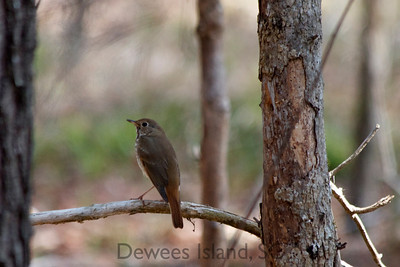 Birds of Dewees Island