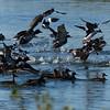 Mixed Flock Takes Flight