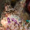 Decorator crab (brown creature at top of pinnacle!)