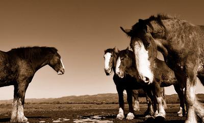 DsrtVW - Horse Sense (DSS Round #45: Together or Apart—Single Exposure Challenge)