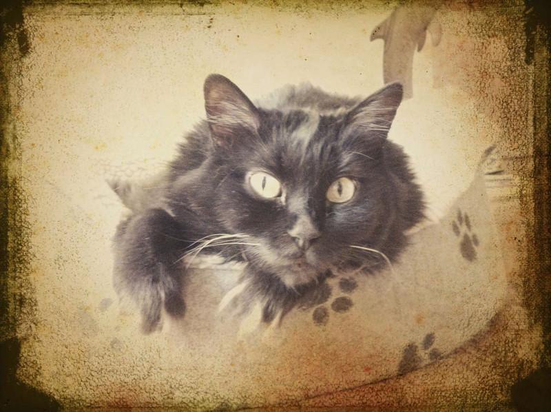 MLangton - Miss Kitty