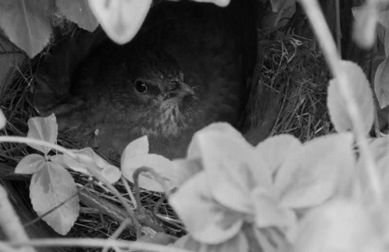 cederic-Feathered Nest