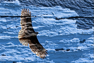 billseye - Painted Sky with Hawk EXIF Gallery Here