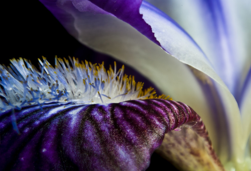 rbt - iris
