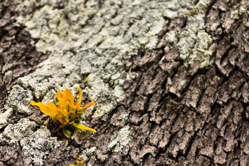divmedic4-Blooming Log