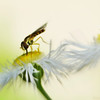 SeascapeS -Wispy Whimsy Wasp