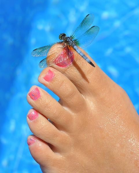Momforwildlife-The new toe jewelry!