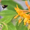 kentwaller - busy bee