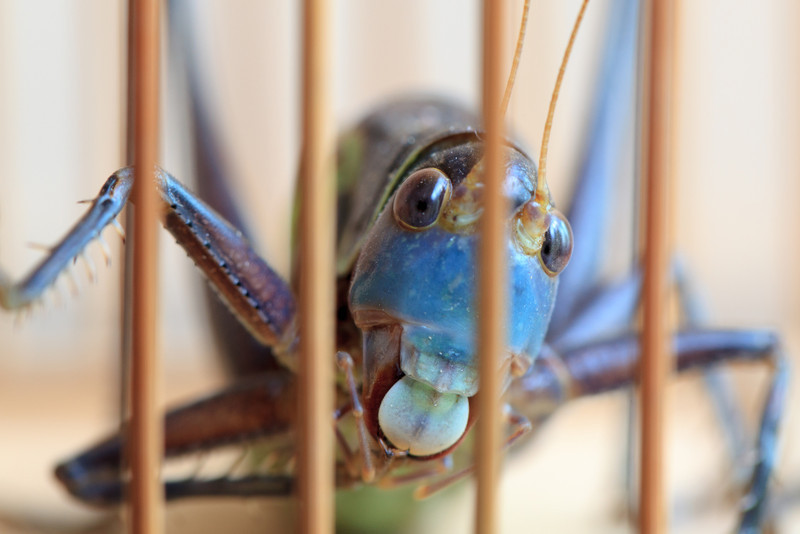 pemmett - Busted big bug!