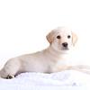 cbbr - High Key Puppy