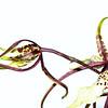 kentwaller - gretchen's blumen