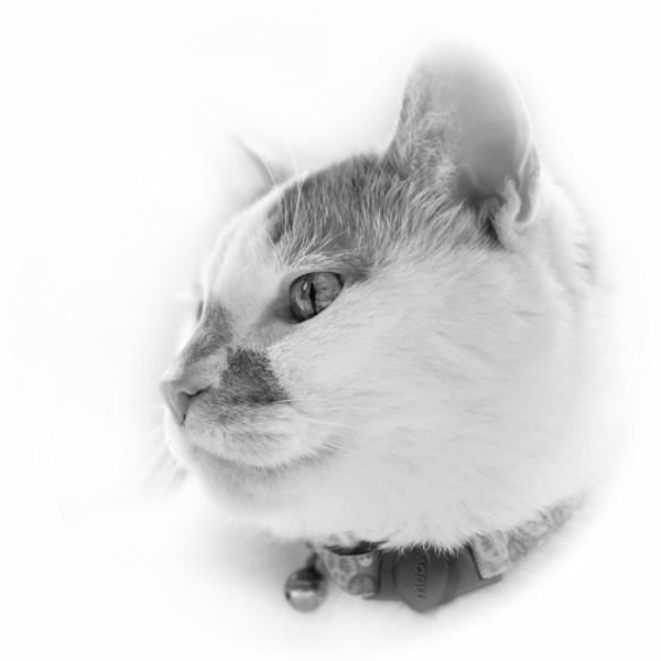 bfluegie - Peace Kitty
