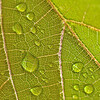 kdotaylor - Summer Raindrops