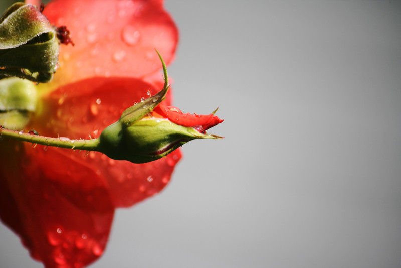 sweetharmony - After the rain....