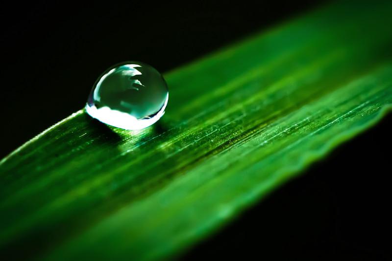 Chandlerja - Drop of Life