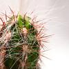 Jenn - Old Man Cactus