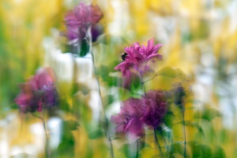 """lkbart - Fading blooms <a href=""""http://bartlettphotoart.smugmug.com/photos/newexif.mg?ImageID=2122698345&ImageKey=cHkPr4Z"""" target=""""_blank"""">EXIF</a> <a href=""""http://bartlettphotoart.smugmug.com/photos/newexif.mg?ImageID=2122698444&ImageKey=2xQpJTf"""" target=""""_blank"""">EXIF</a>"""