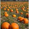 Woodsman - Pumpkin Fields Forever
