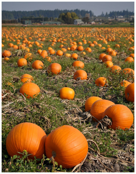 Woodsman - Pumpkin Fields Forever