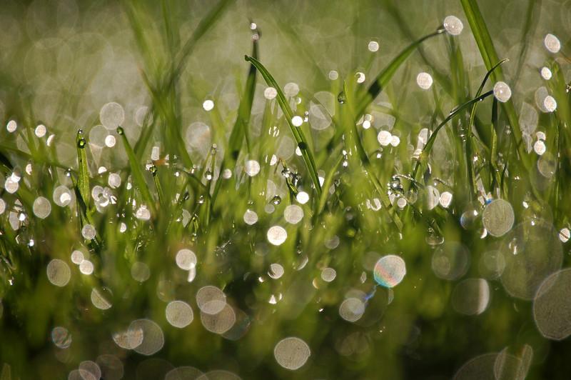 Johnloguk - Autumn Dew