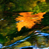 sapphire73 - Golden Leaf in Water