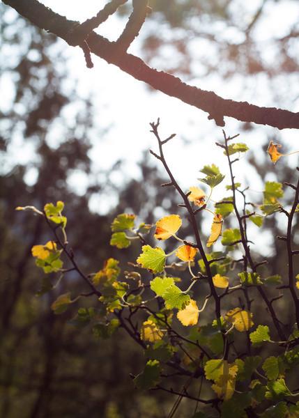 RevLine Photo_Morning Bliss