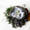 sweetharmony - Autumn Nest