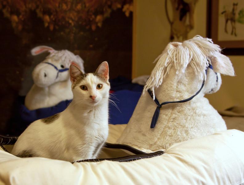 lkbart - Cat in the Horse?