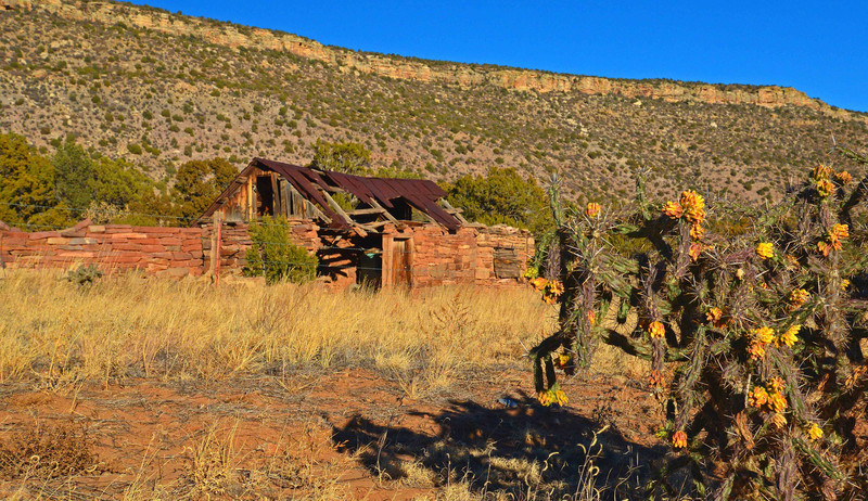 Endurodog - Cactus Cabin