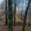 fjcvisual -   Winter Woods