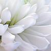 kdotaylor - White Serenity