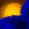 lkbart - Bluegrass Dawn