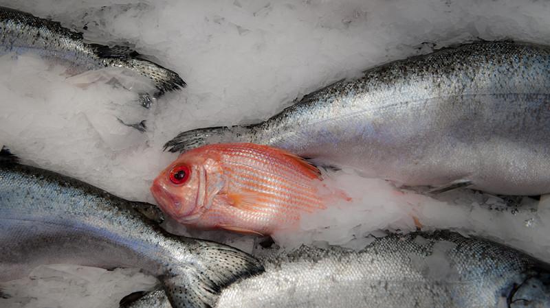 dc.roake - Fish Tail