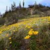 dlplumer - Tucson