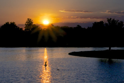 GretaPics - Cormorant Enjoys Suns Last Rays